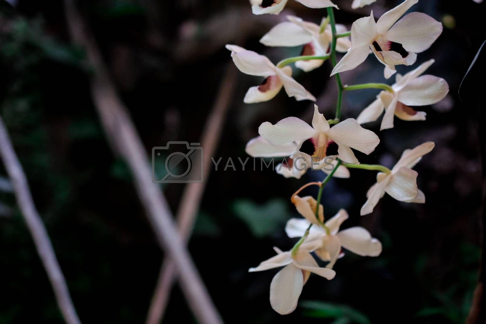 orchids flower on background