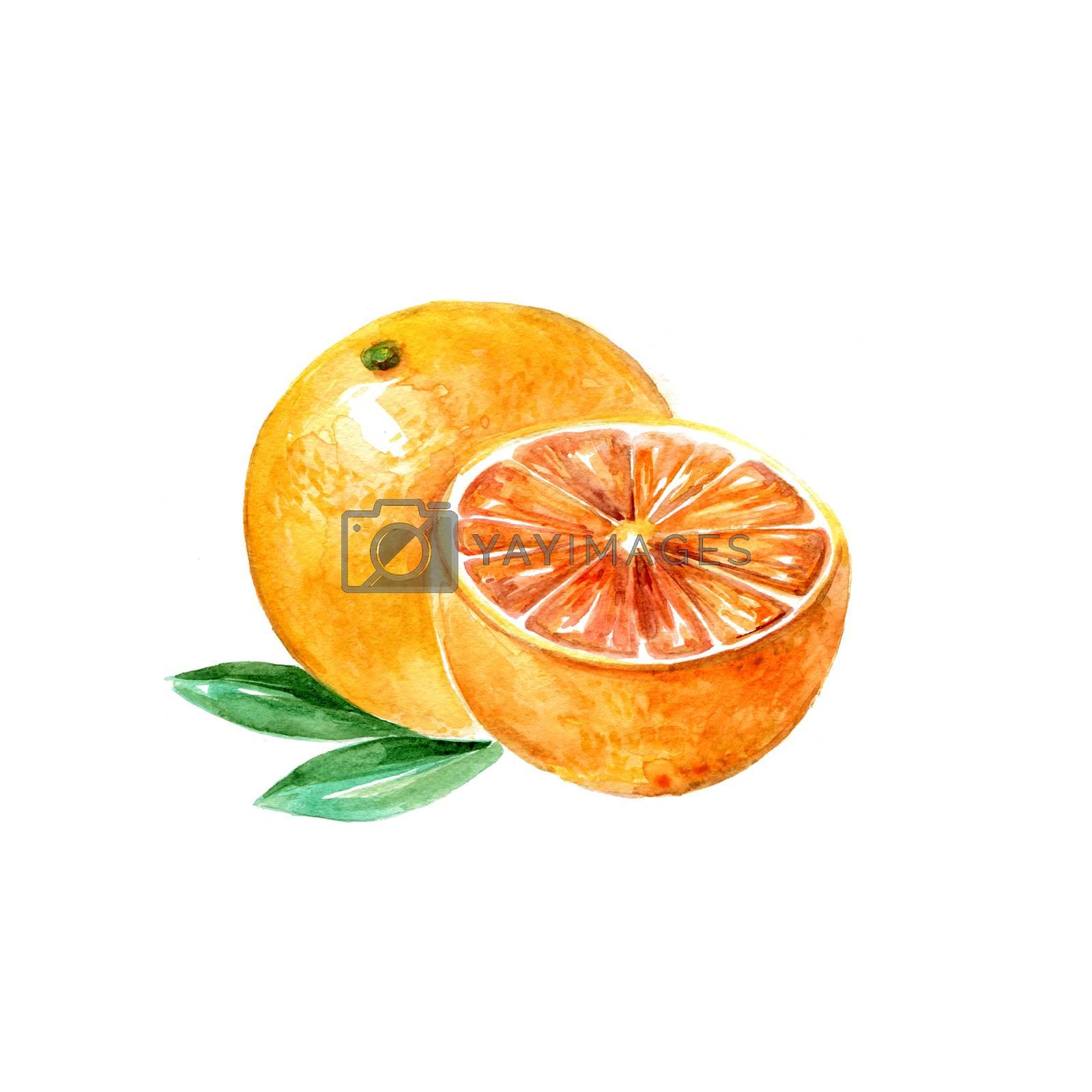 Watercolor Grapefruit. Hand Drawn Illustration Organic Food Vegetarian Ingredient