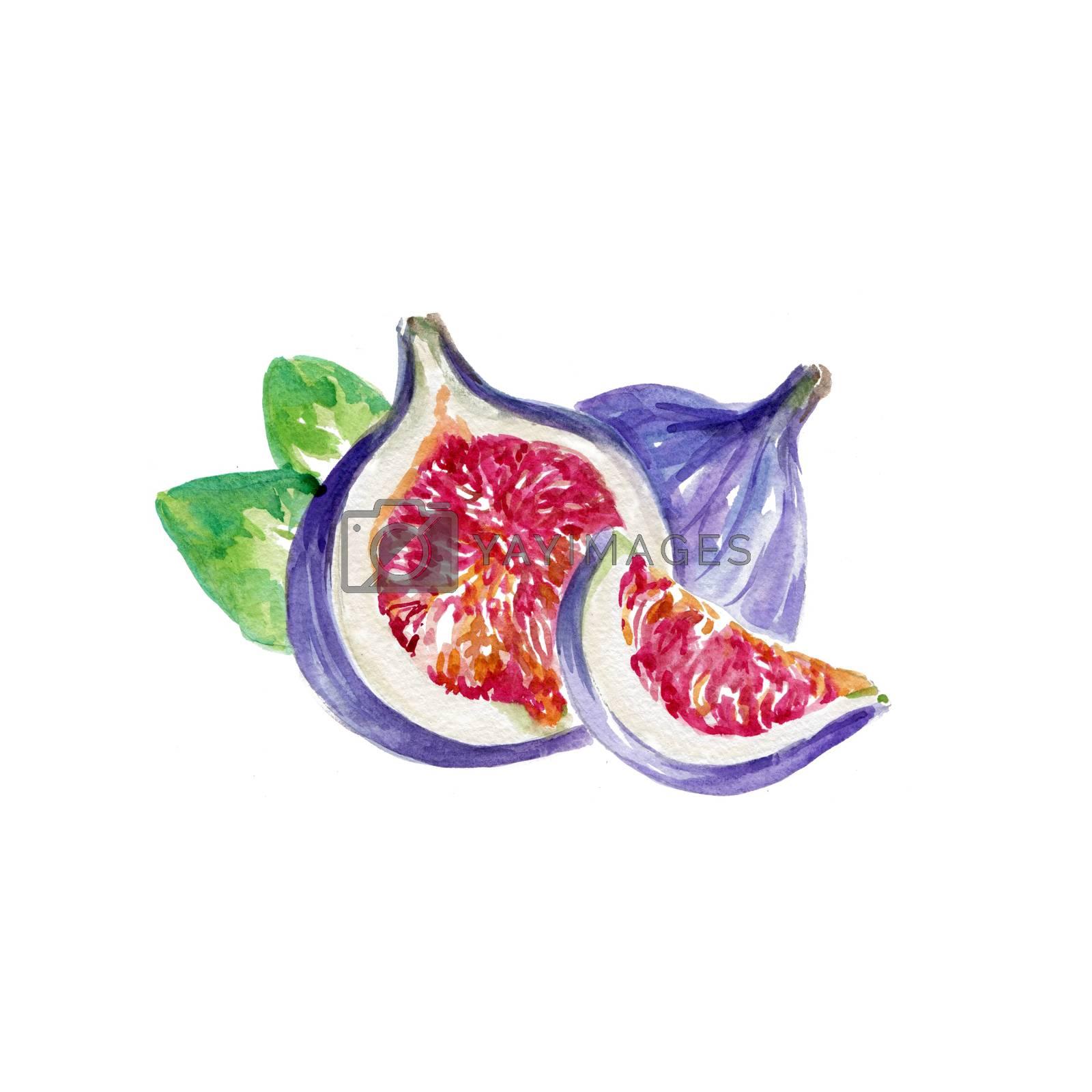 Watercolor Whole Figs. Hand Drawn Illustration Organic Food Vegetarian Ingredient