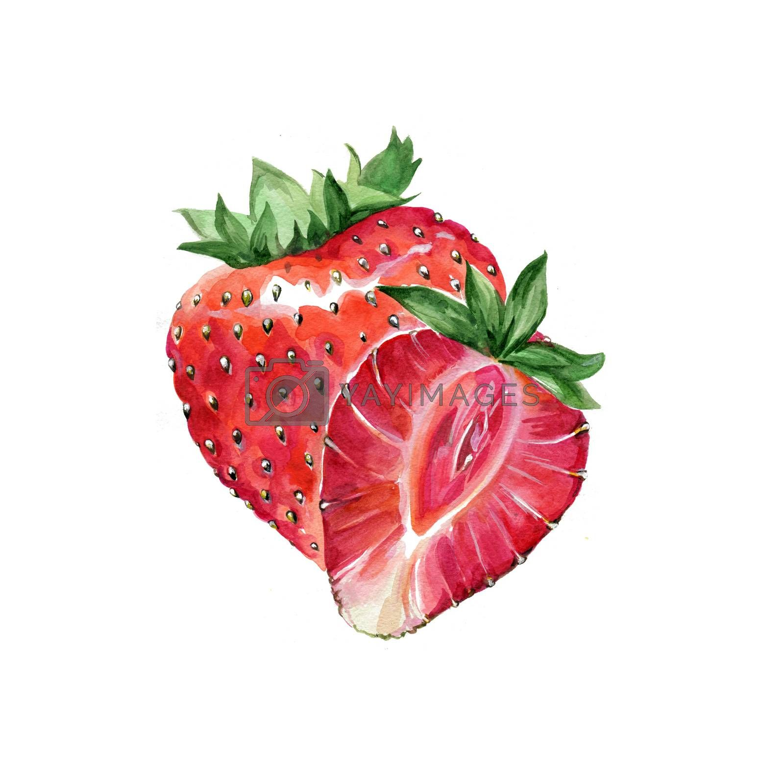 Watercolor Strawberries. Hand Drawn Illustration Organic Food Vegetarian Ingredient