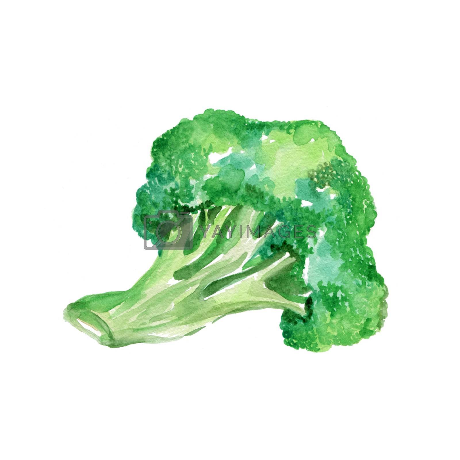 Watercolor Broccoli. Hand Drawn Illustration Organic Food Vegetarian Ingredient