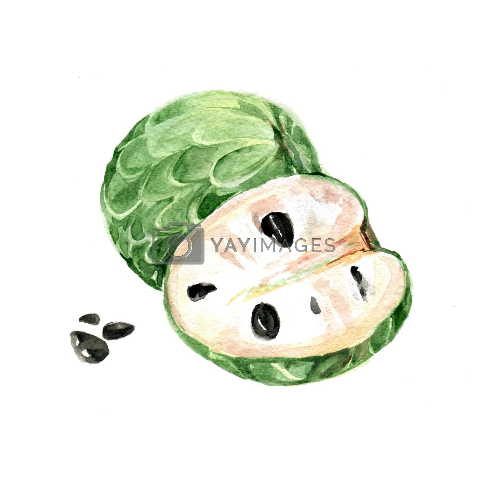 Watercolor Annona. Hand Drawn Illustration Organic Food Vegetarian Ingredient