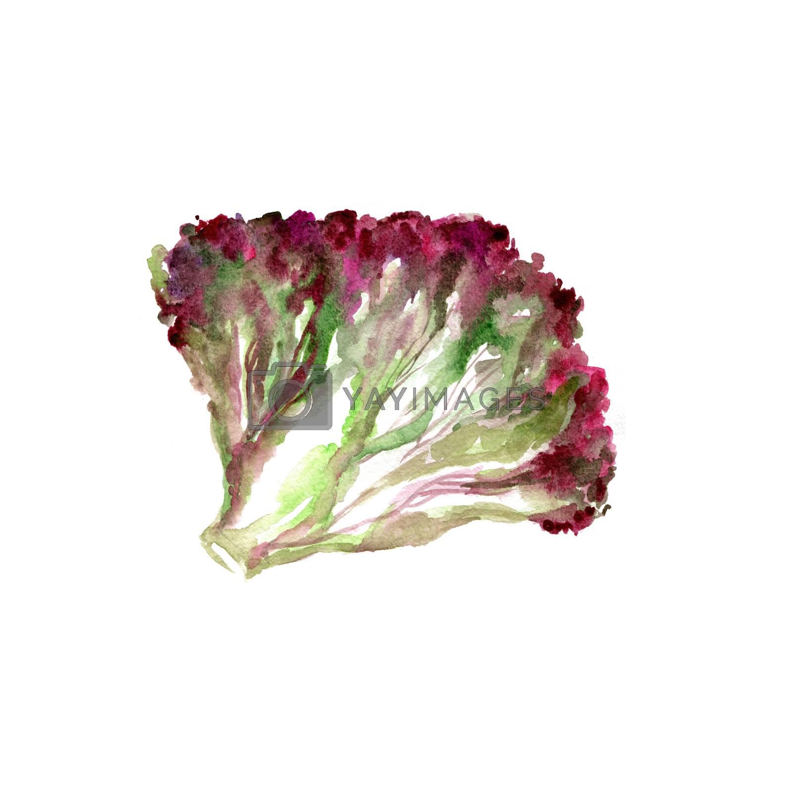 Watercolor Lettuce Leaves. Hand Drawn Illustration Organic Food Vegetarian Ingredient