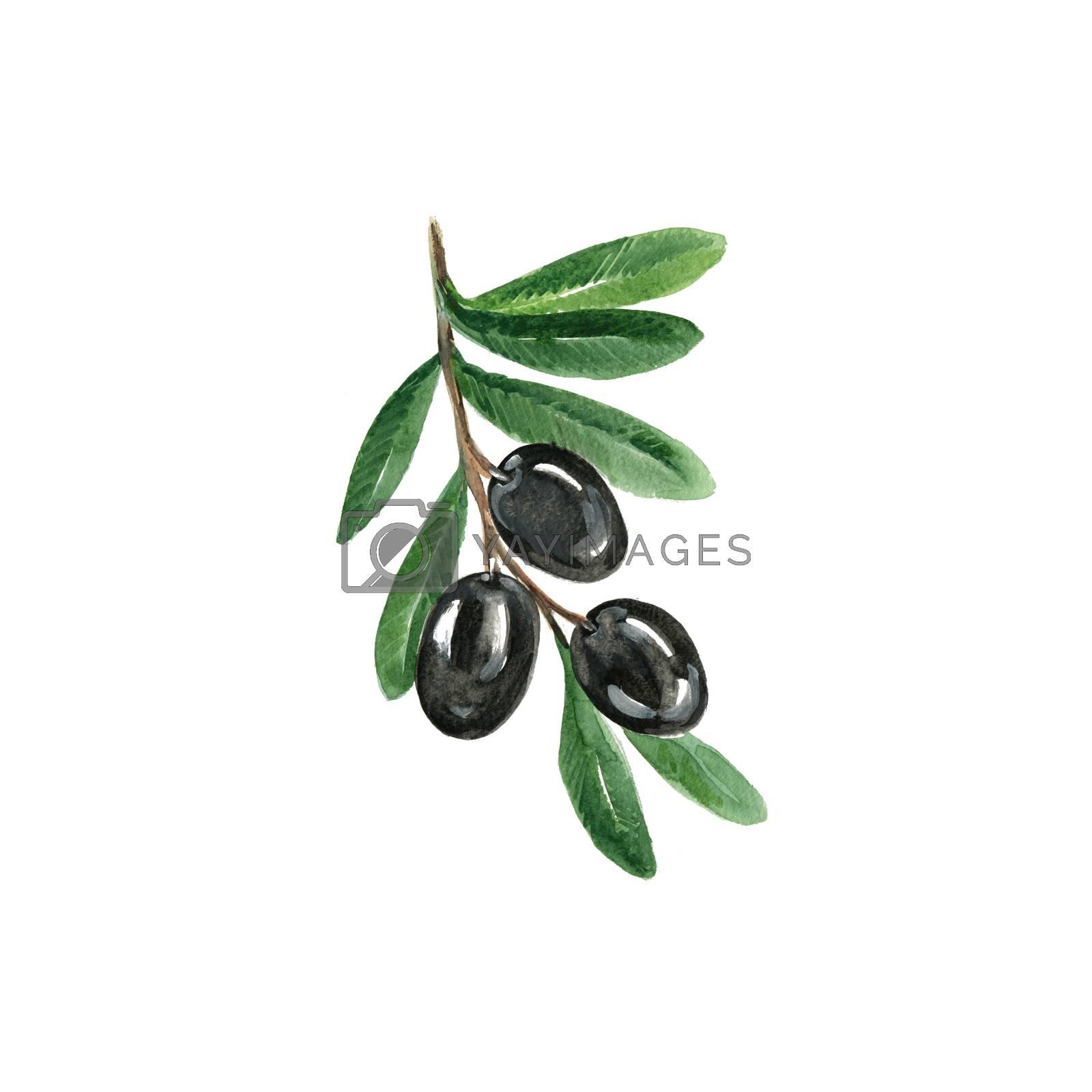Watercolor Black Olives. Hand Drawn Illustration Organic Food Vegetarian Ingredient