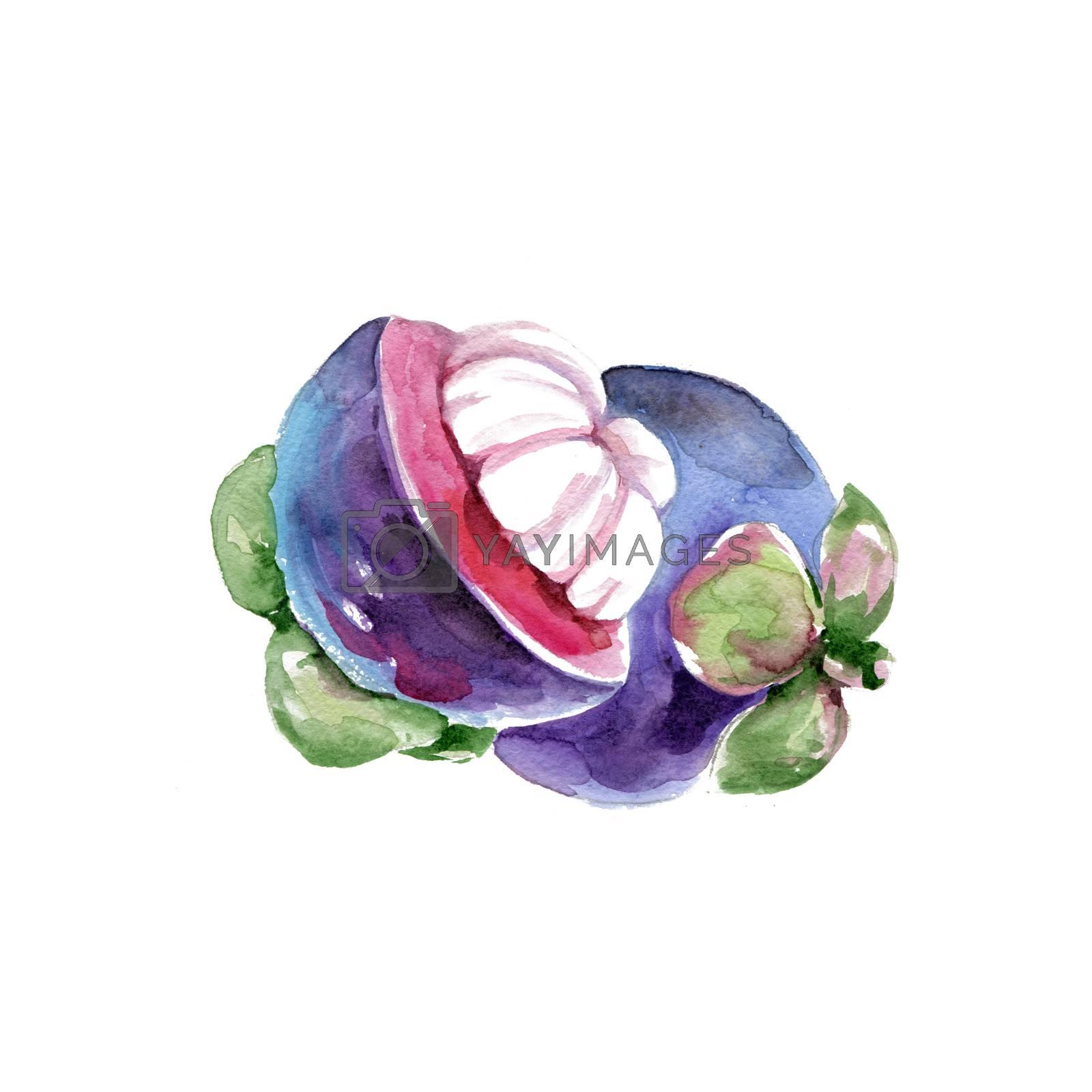 Watercolor Mangosteen. Hand Drawn Illustration Organic Food Vegetarian Ingredient