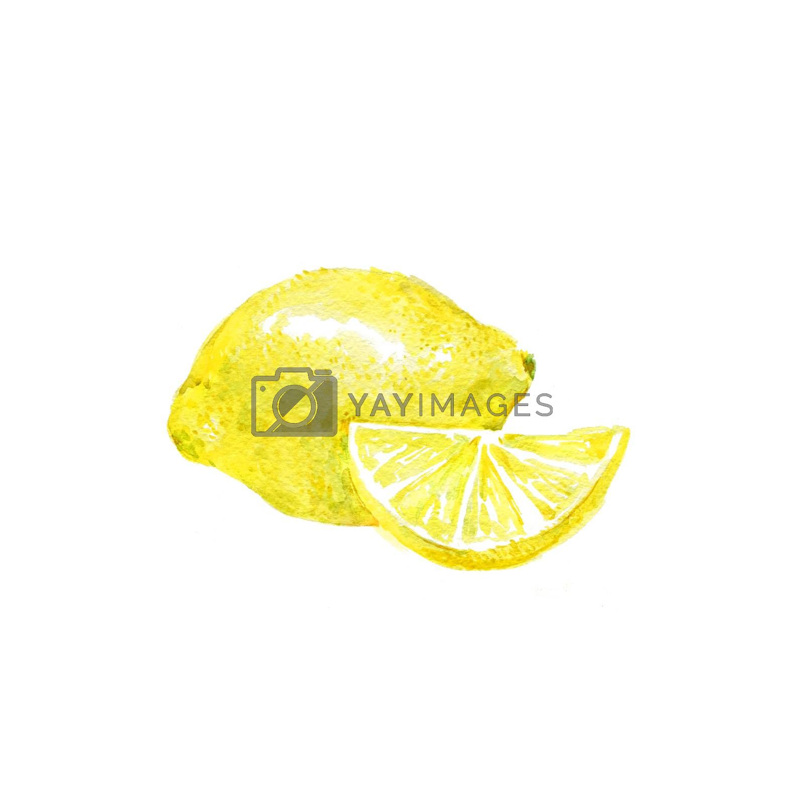 Watercolor Lemon. Hand Drawn Illustration Organic Food Vegetarian Ingredient