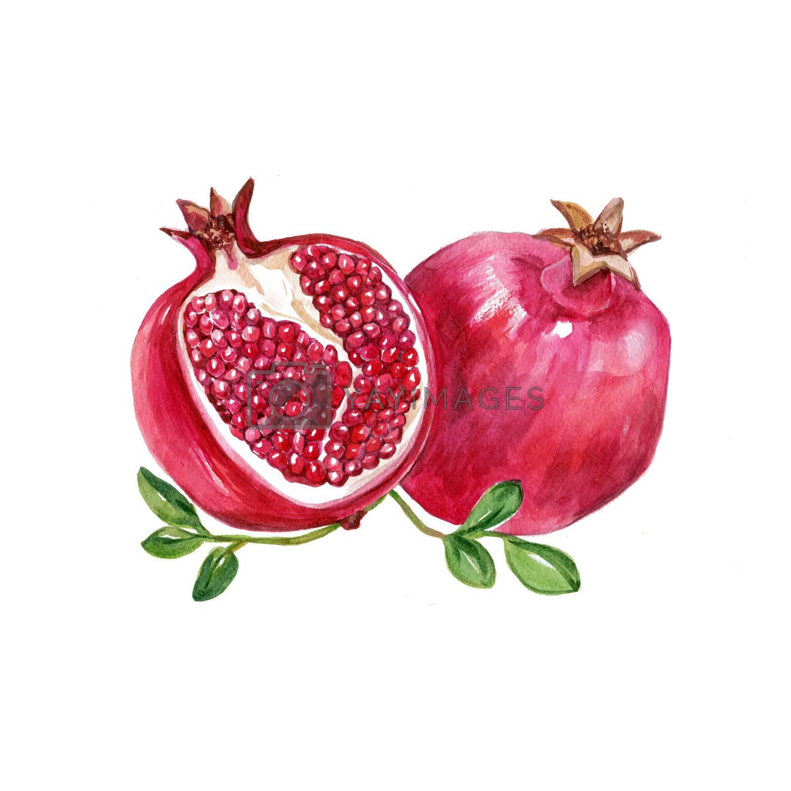 Watercolor Garnet. Hand Drawn Illustration Organic Food Vegetarian Ingredient
