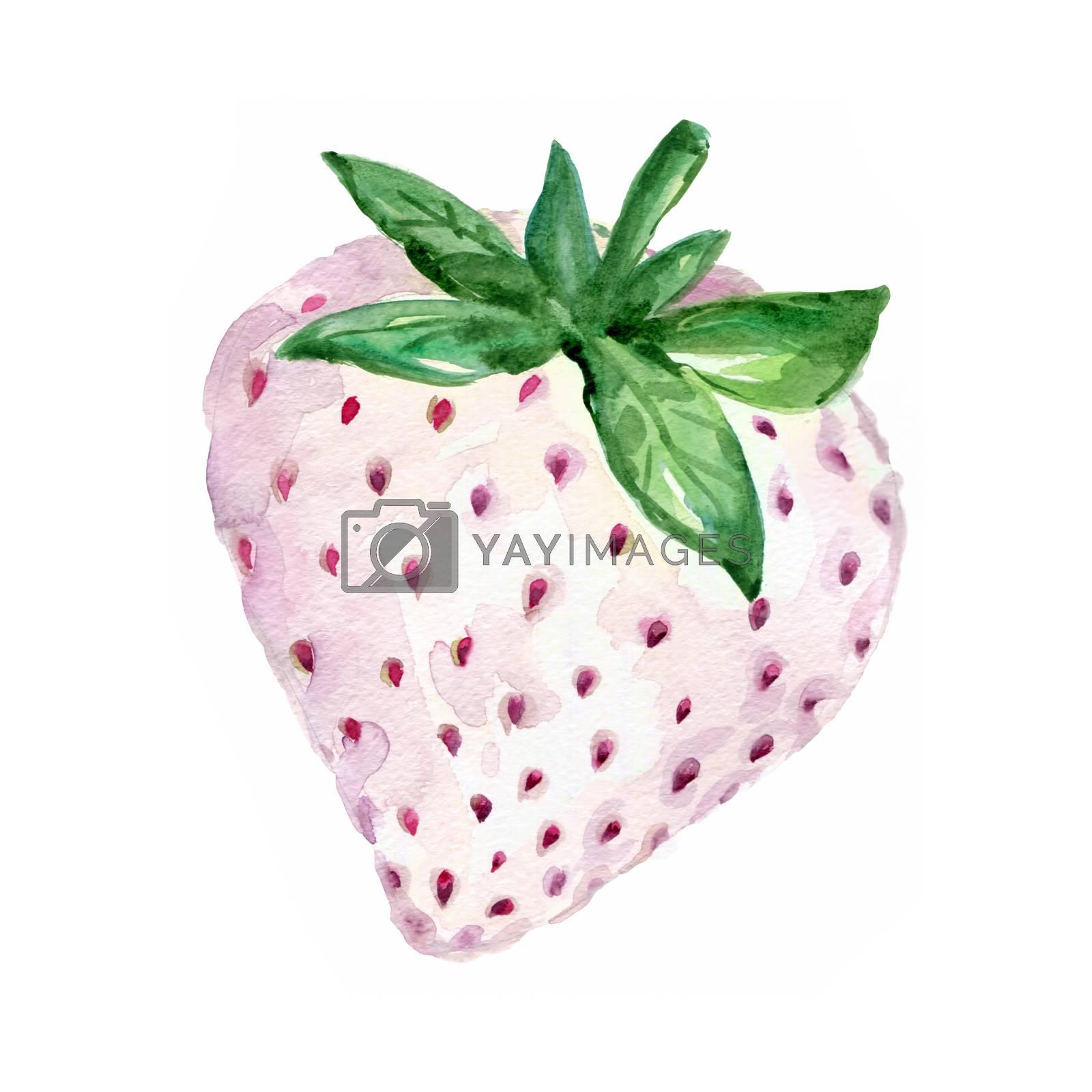 Watercolor White Strawberry. Hand Drawn Illustration Organic Food Vegetarian Ingredient