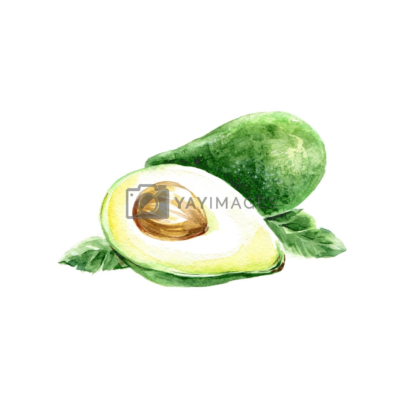 Watercolor Avocado. Hand Drawn Illustration Organic Food Vegetarian Ingredient