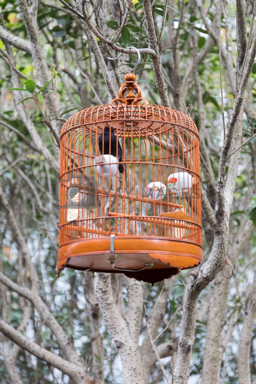 Black Bird in Vintage Cage Outside