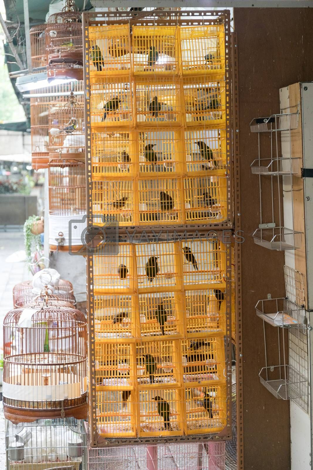 Yellow Plastic Cages With Birds at Market
