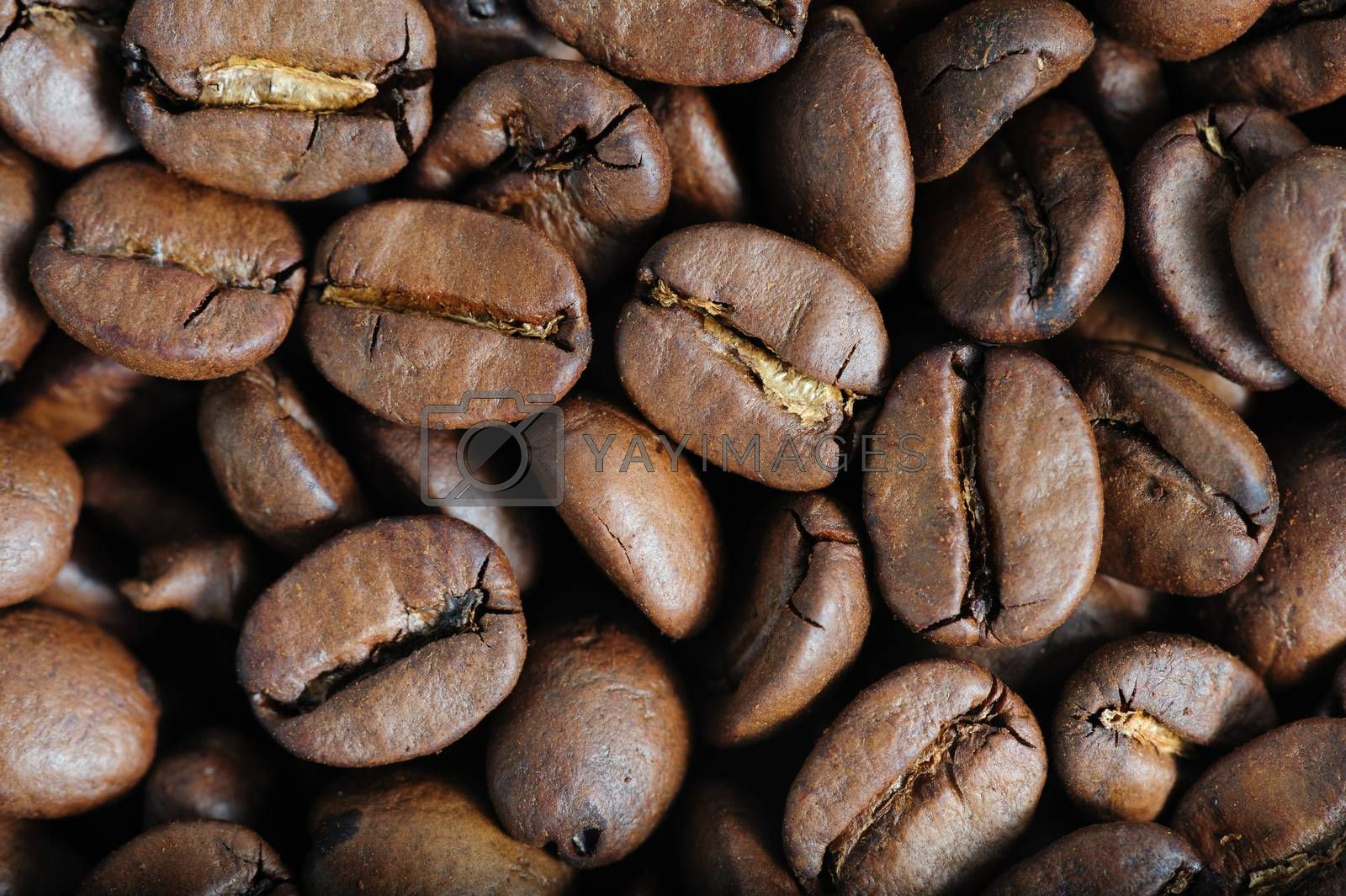 roasted coffee beans macro closeup, can be used as a background