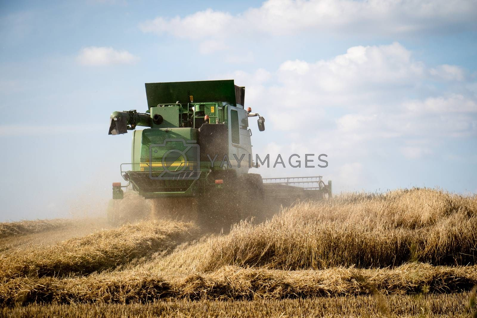 Harvester mowing in the field. Summer, harvest time. Sunny weather while mowing the grain. Village in poland