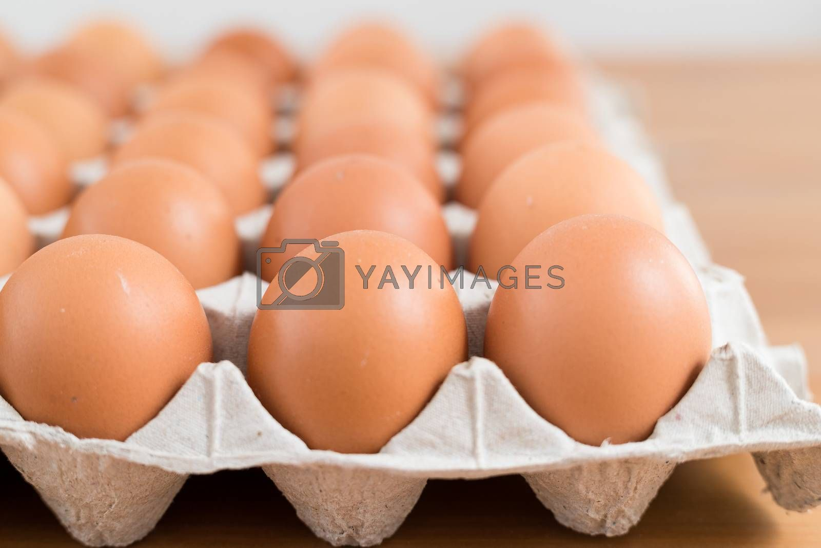 Royalty free image of Egg in pack by leungchopan