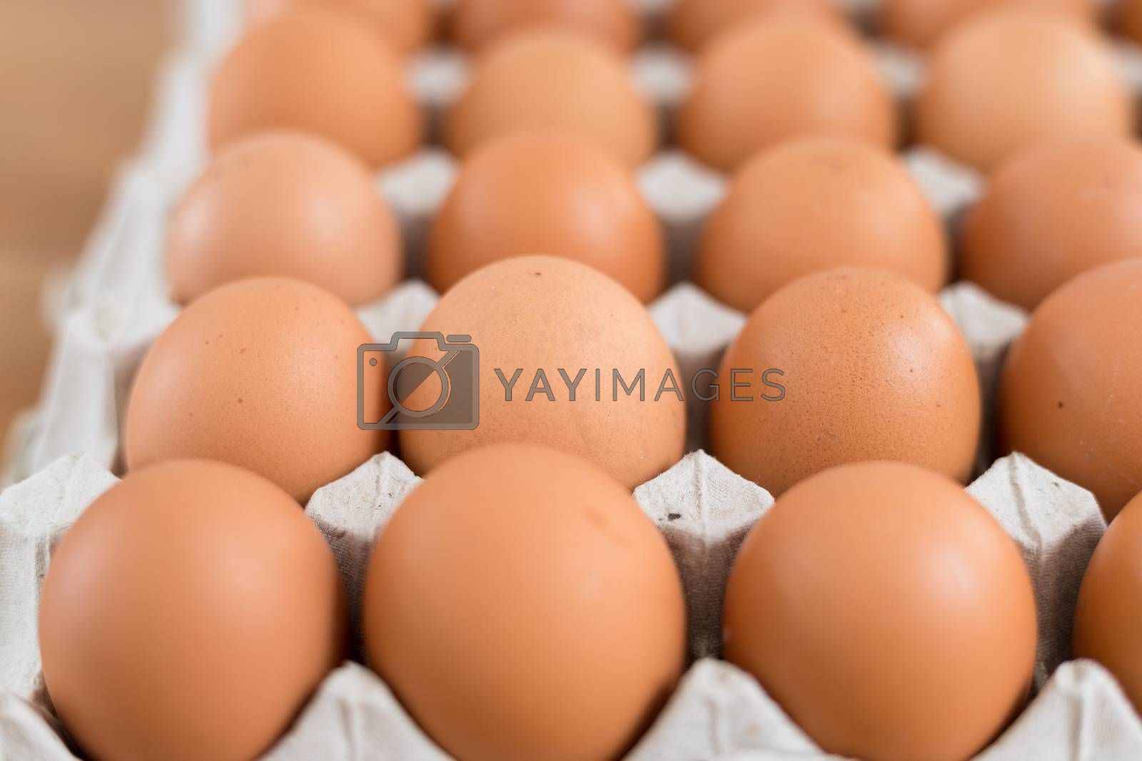 Royalty free image of Fresh chicken egg by leungchopan