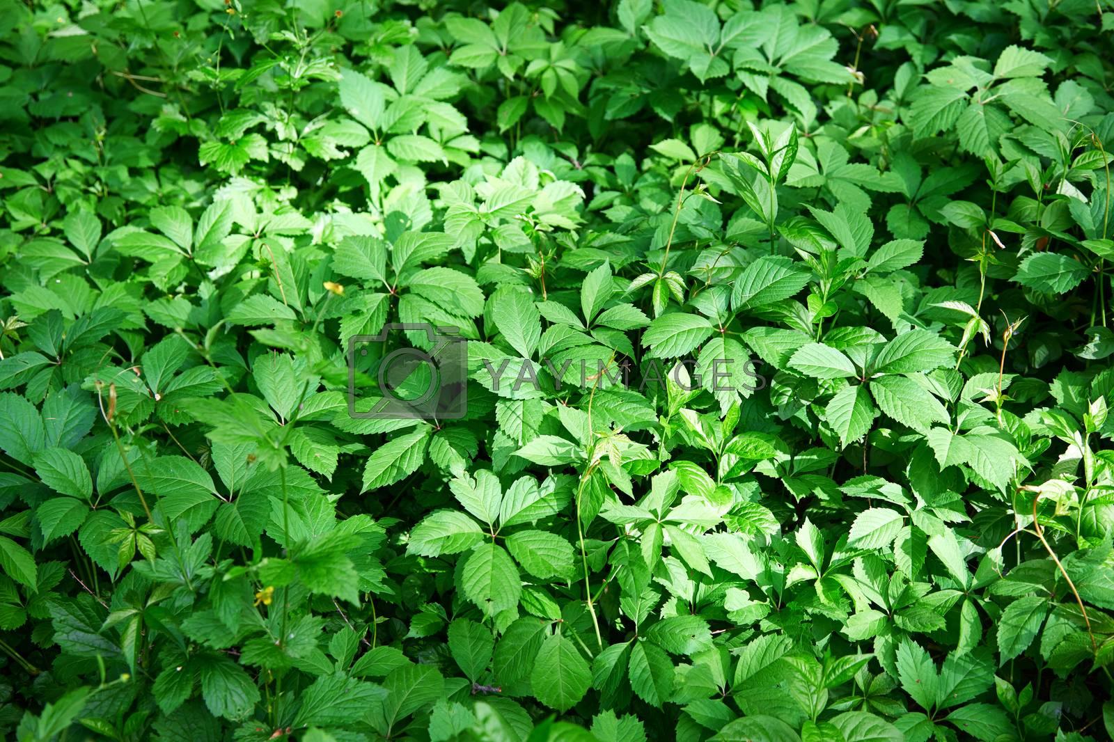 Full frame shot of the green plant leaves. Horizontal photo