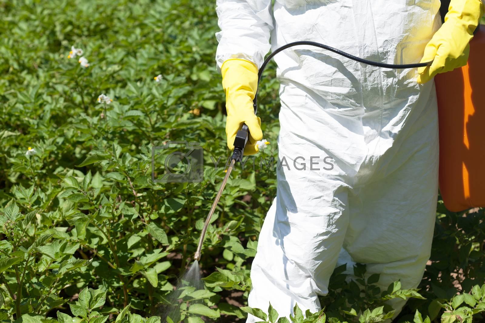 Farmer spraying toxic pesticides in the vegetable garden. Non-organic food.