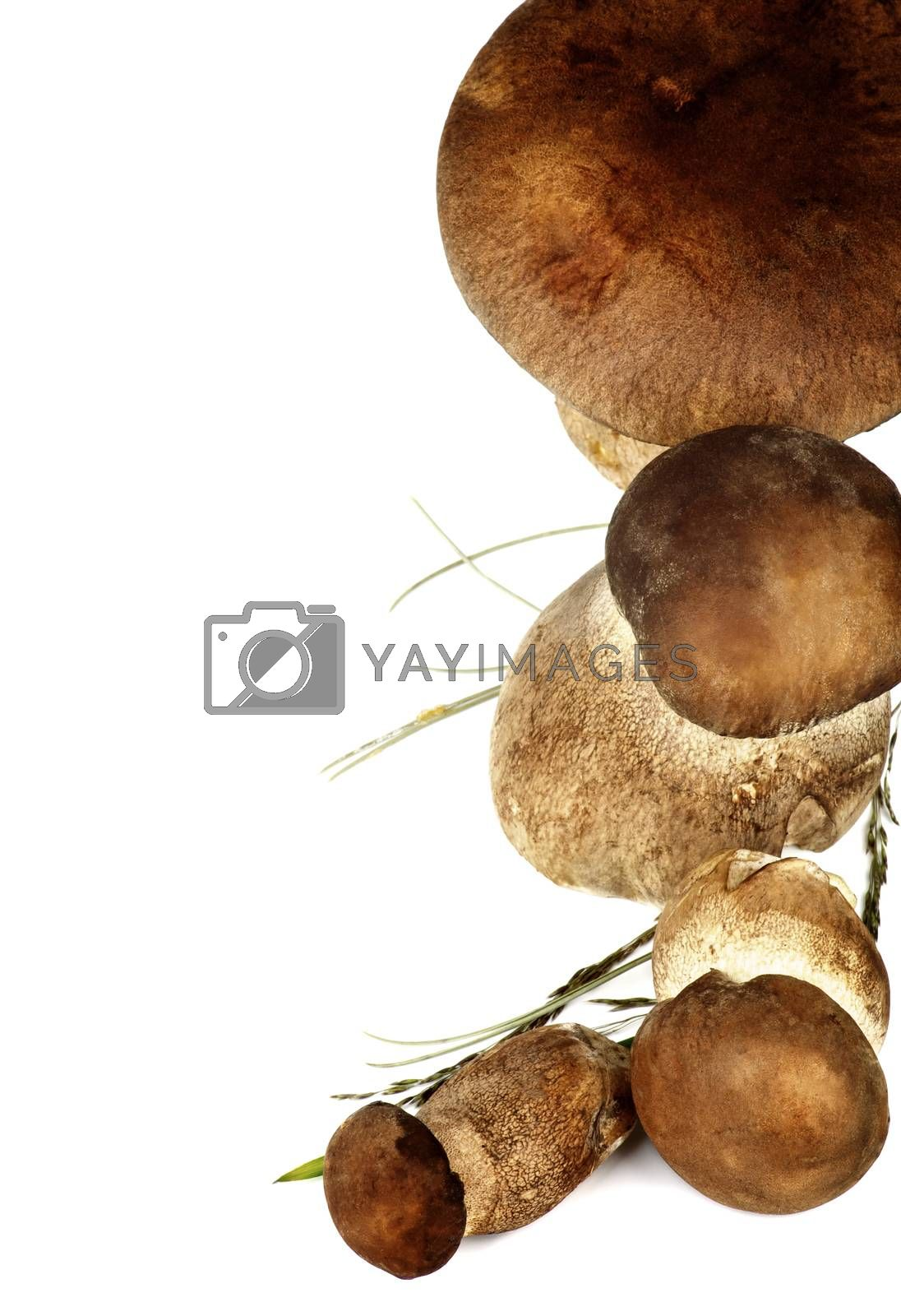 Frame of Raw Boletus Mushrooms with Grass and Stems isolated on White background