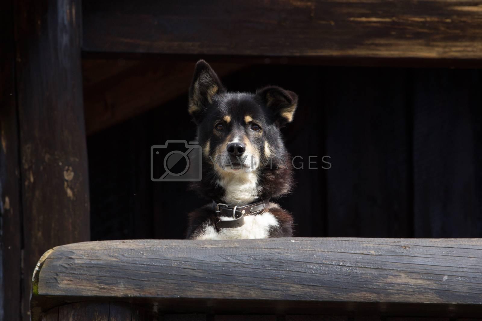 Cute Dog looking at camera shot in norway