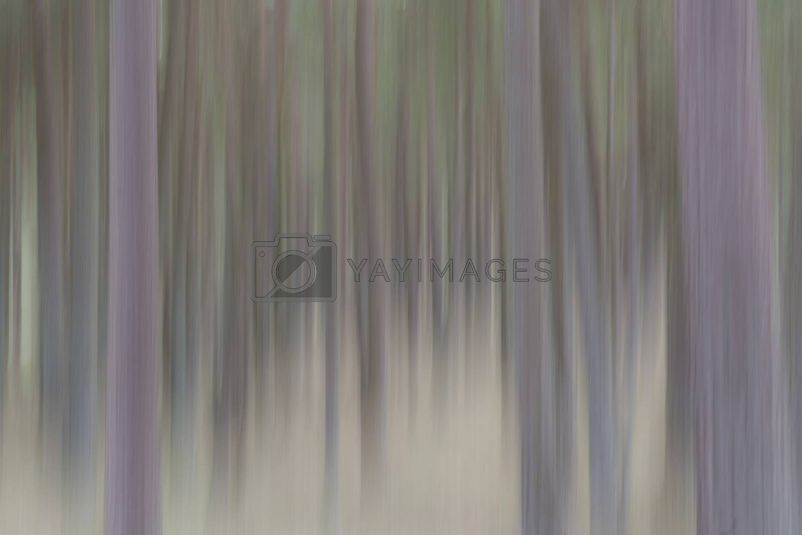 Abstract representation of trees by means of vertical movement as background picture