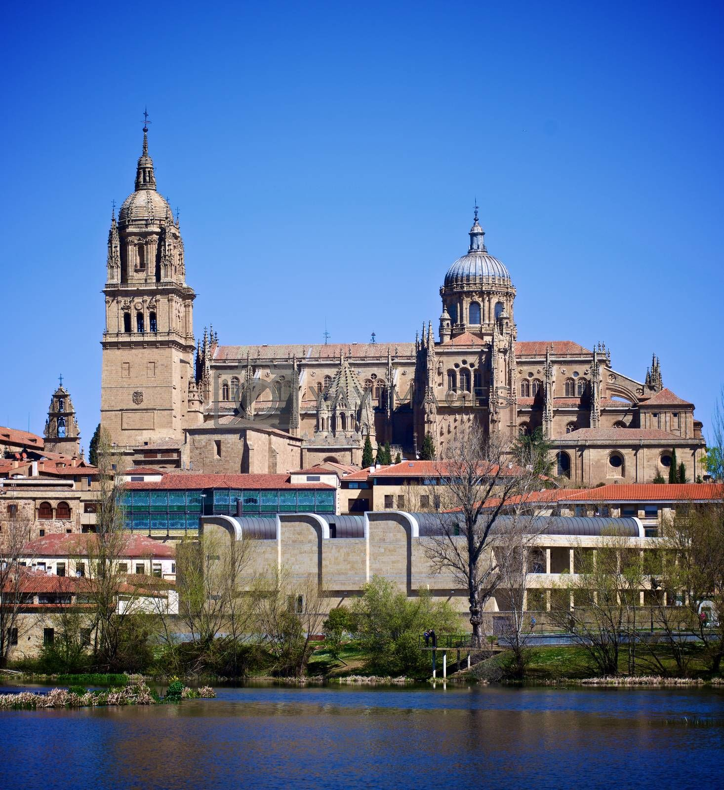 New Cathedral In Salamanca against Blue Sky Outdoors. Castile and Leon, Spain