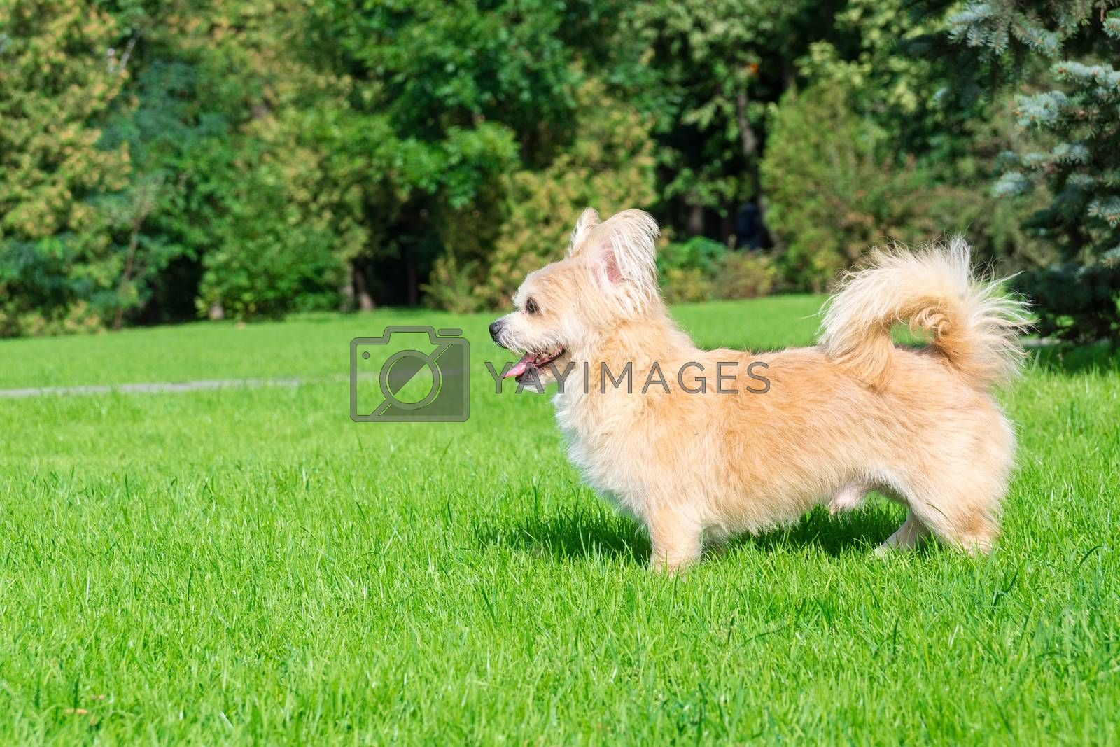 Little dog lying on the grass in the park, nature, autumn