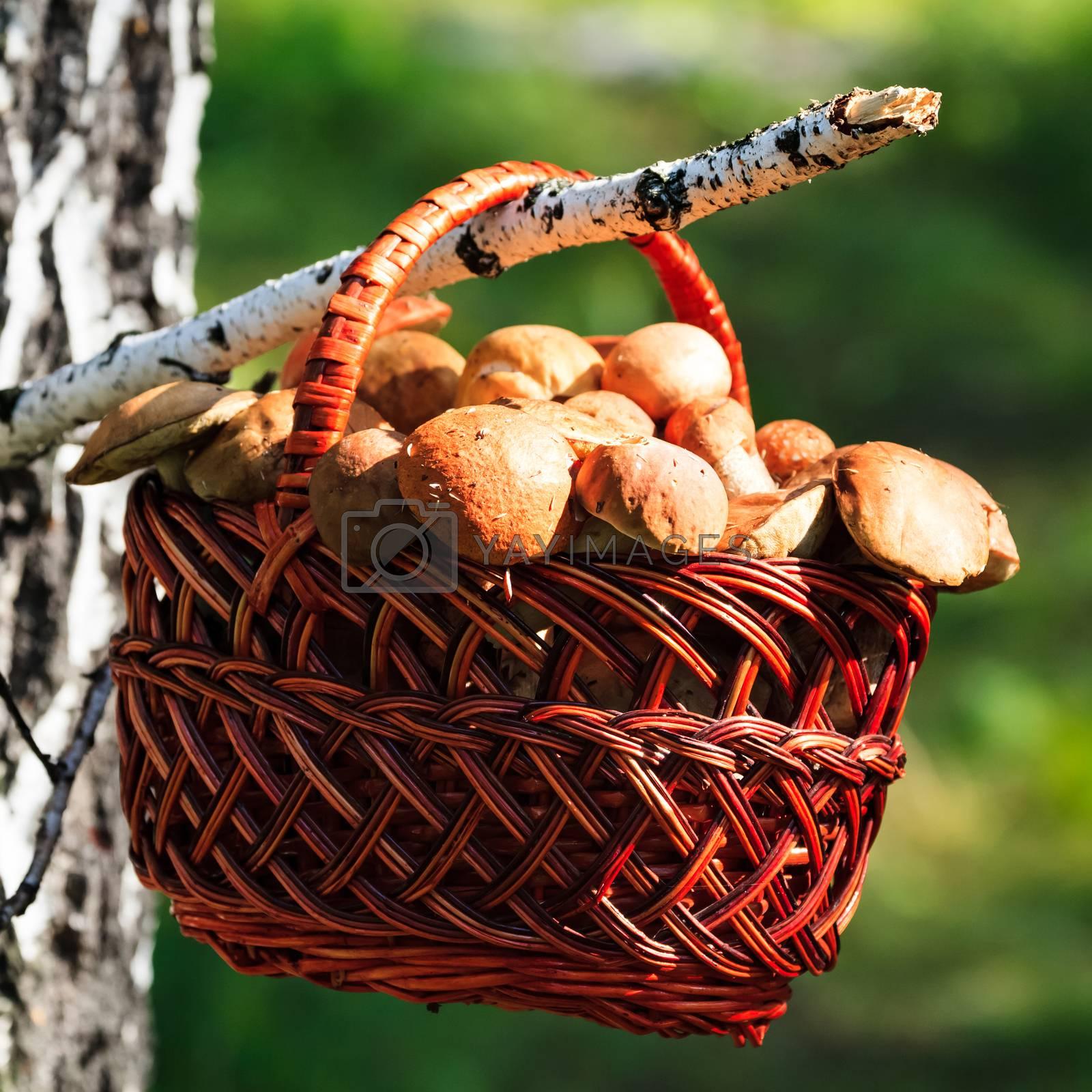 Shot of a big basket full of mushrooms