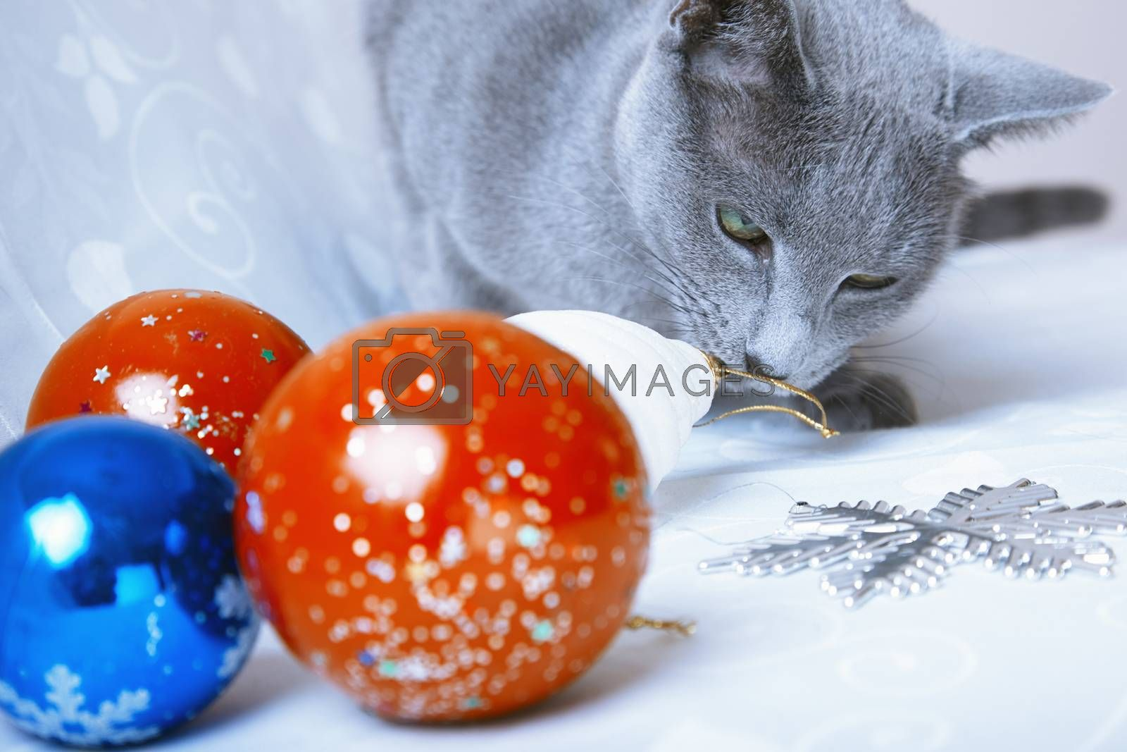 Cat looking at Christmas balls and decoration
