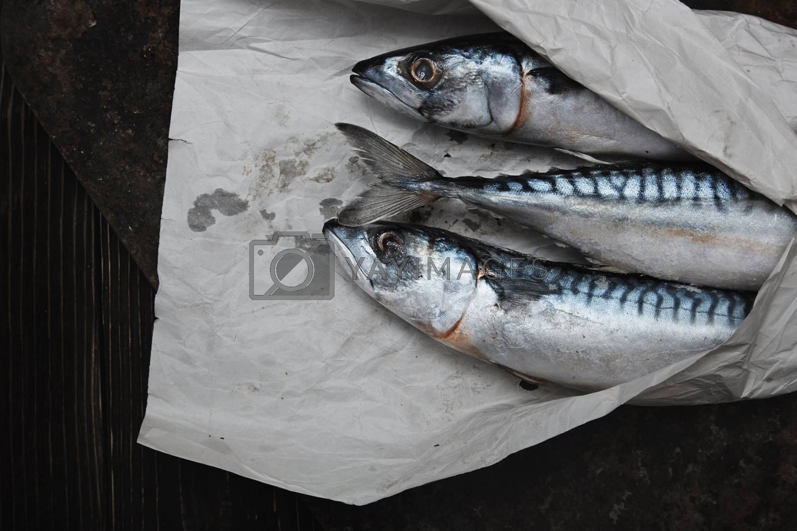 Scomber fish in wrapping paper by Novic