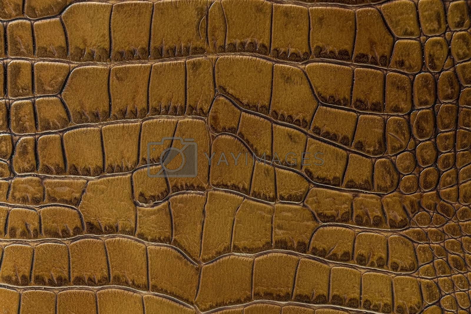 texture of the skin yellow, studio, subject survey