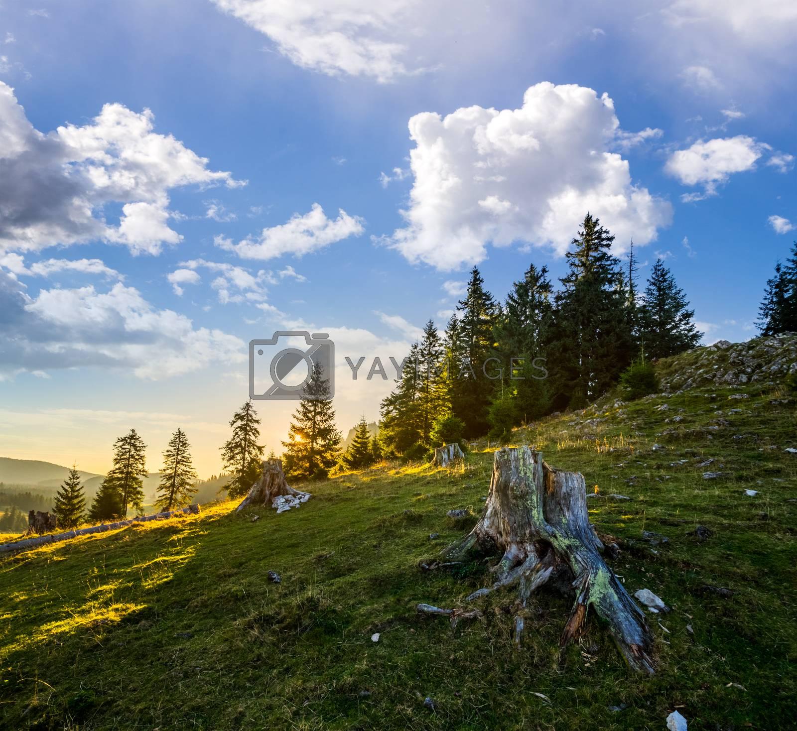stump infront of fir forest on hillside at sunrise by Pellinni