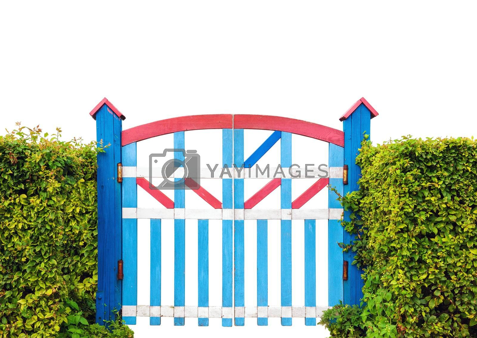 Colorful wooden garden gate with green bush fence isolated on white background