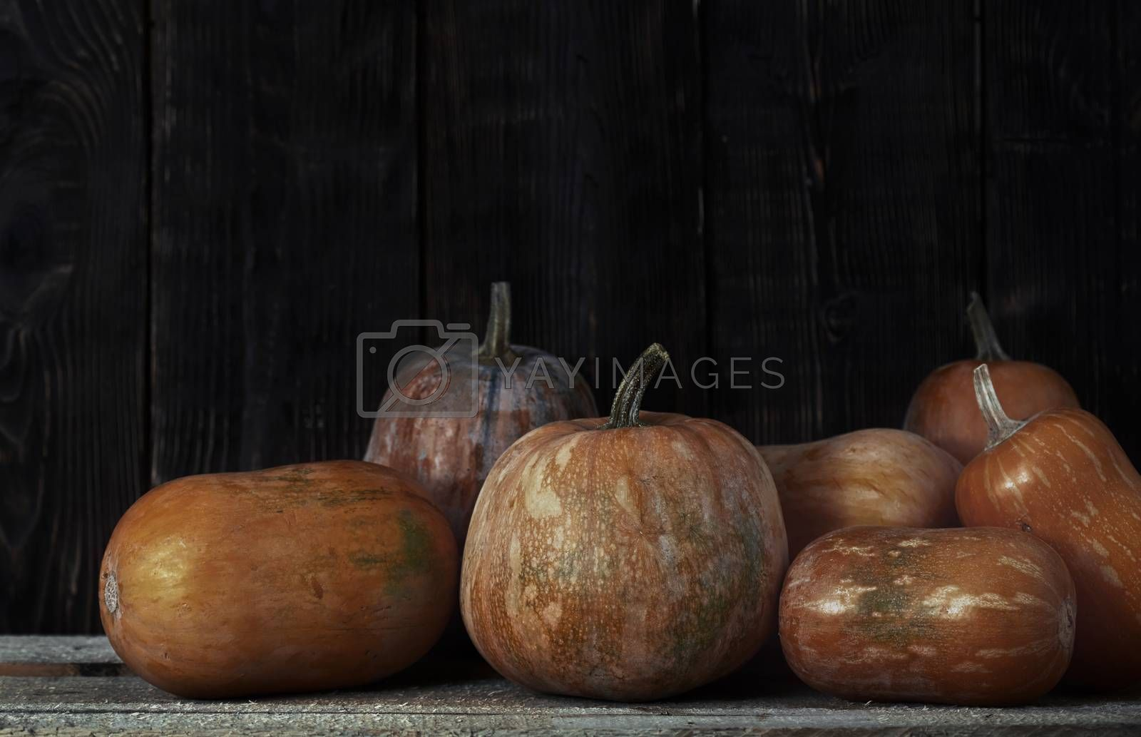 Stack of pumpkins after harvesting in rural place