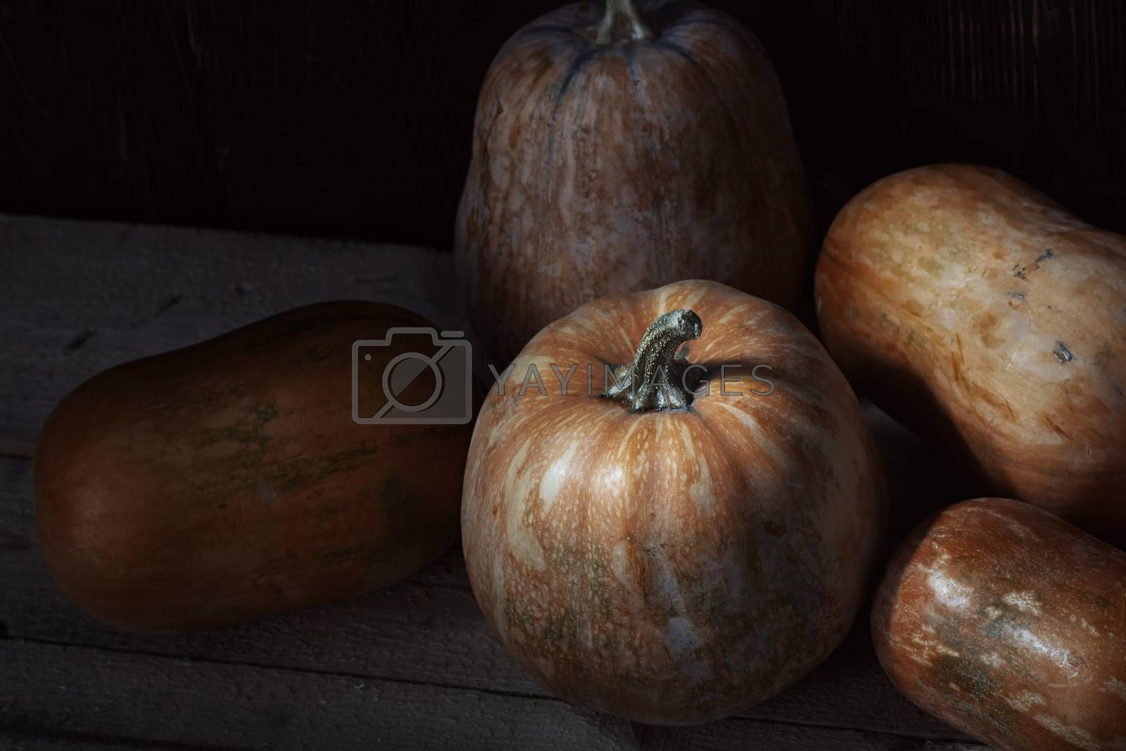 Group of pumpkins on a wooden table by Novic