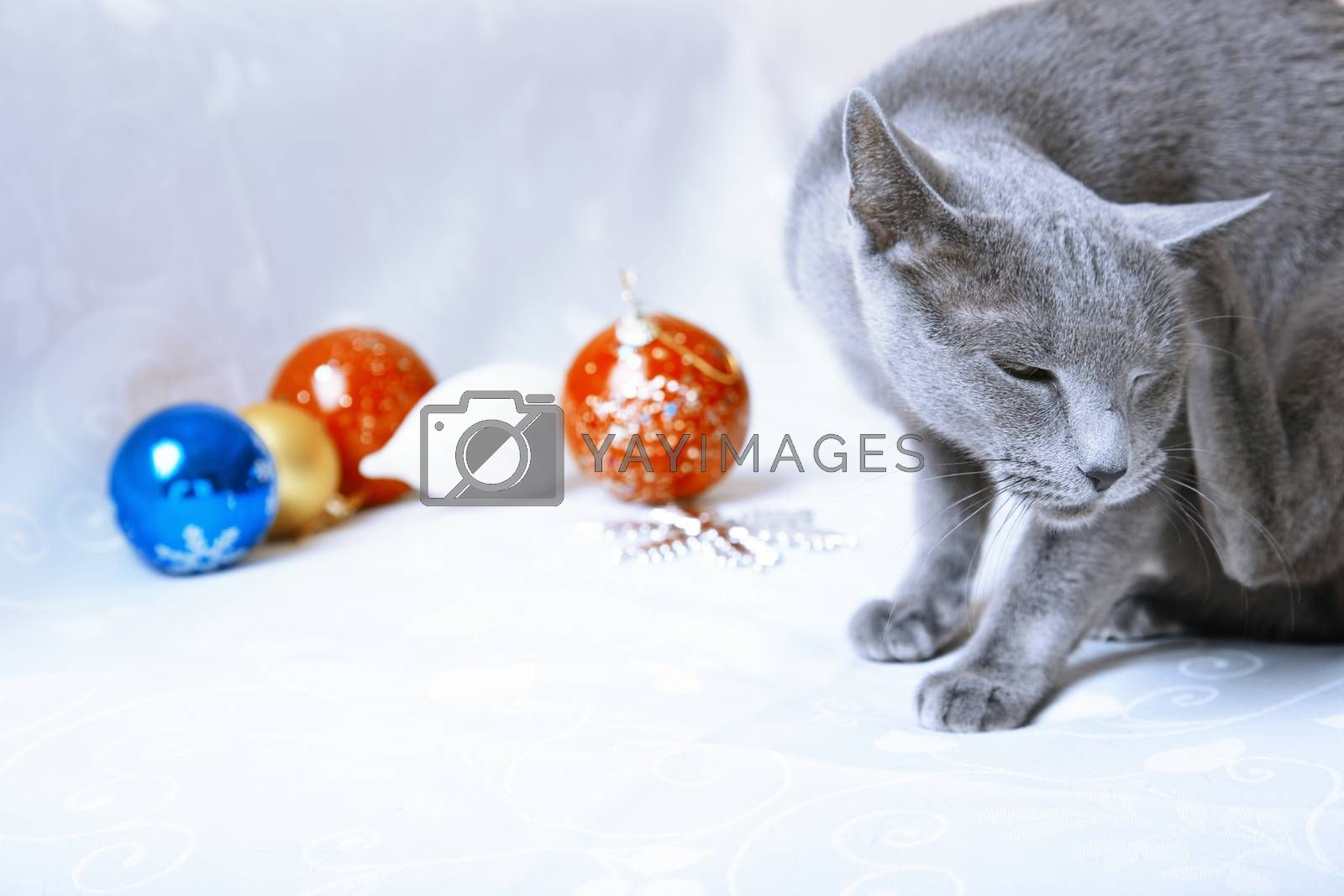 Cat itching near the Christmas decoration