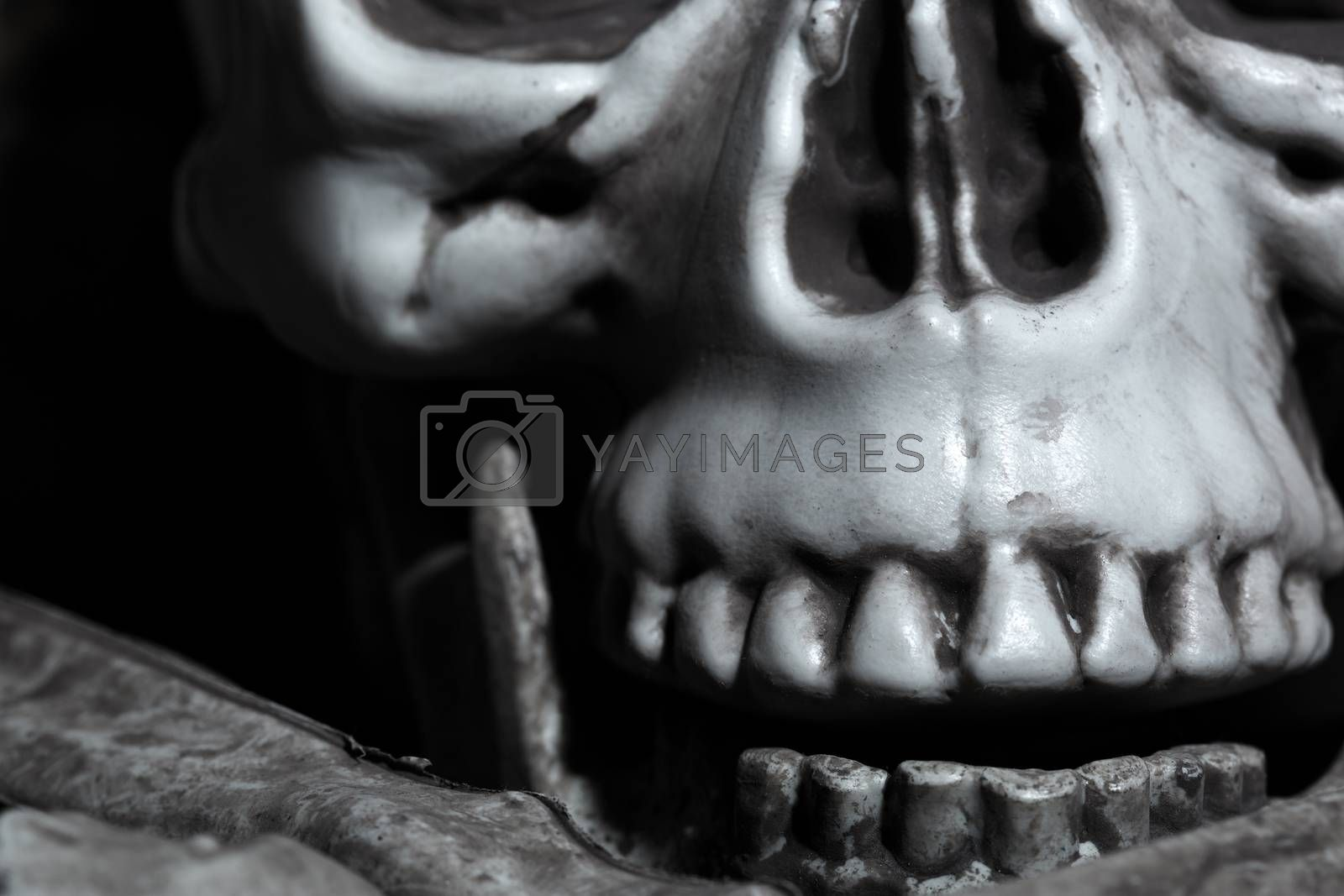 Close-up horizontal photo of the human skull