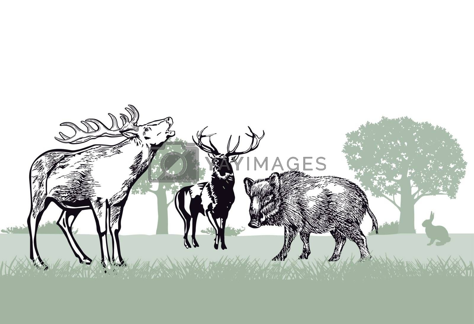 Deer and wild boar in the forest