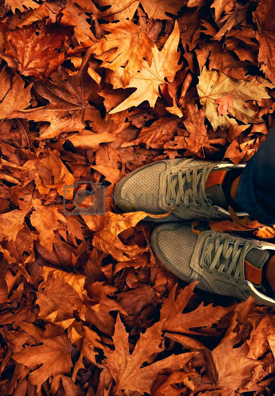 Women's shoes on the ground, floor covered with dry fall leaves, walking in the park, autumn weather concept