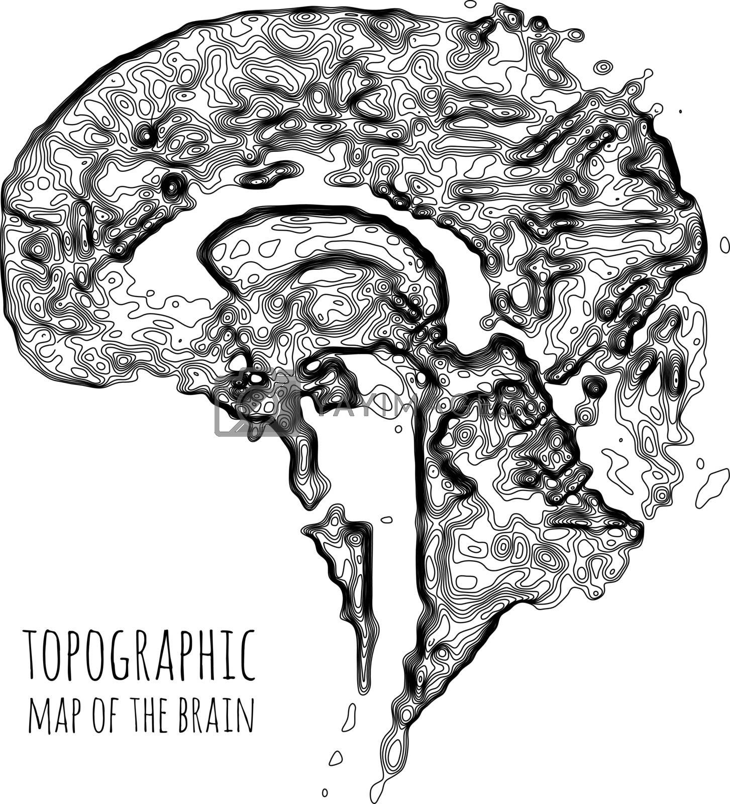 Royalty free image of The brain in the form of a topographic map. The concept of modern technology, data transfer between neurons. by sermax55