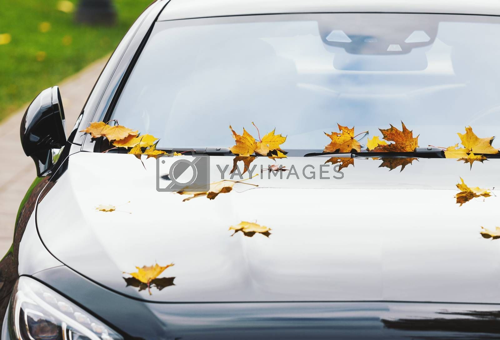 Yellow maple leaves on a new luxury black car at autumn