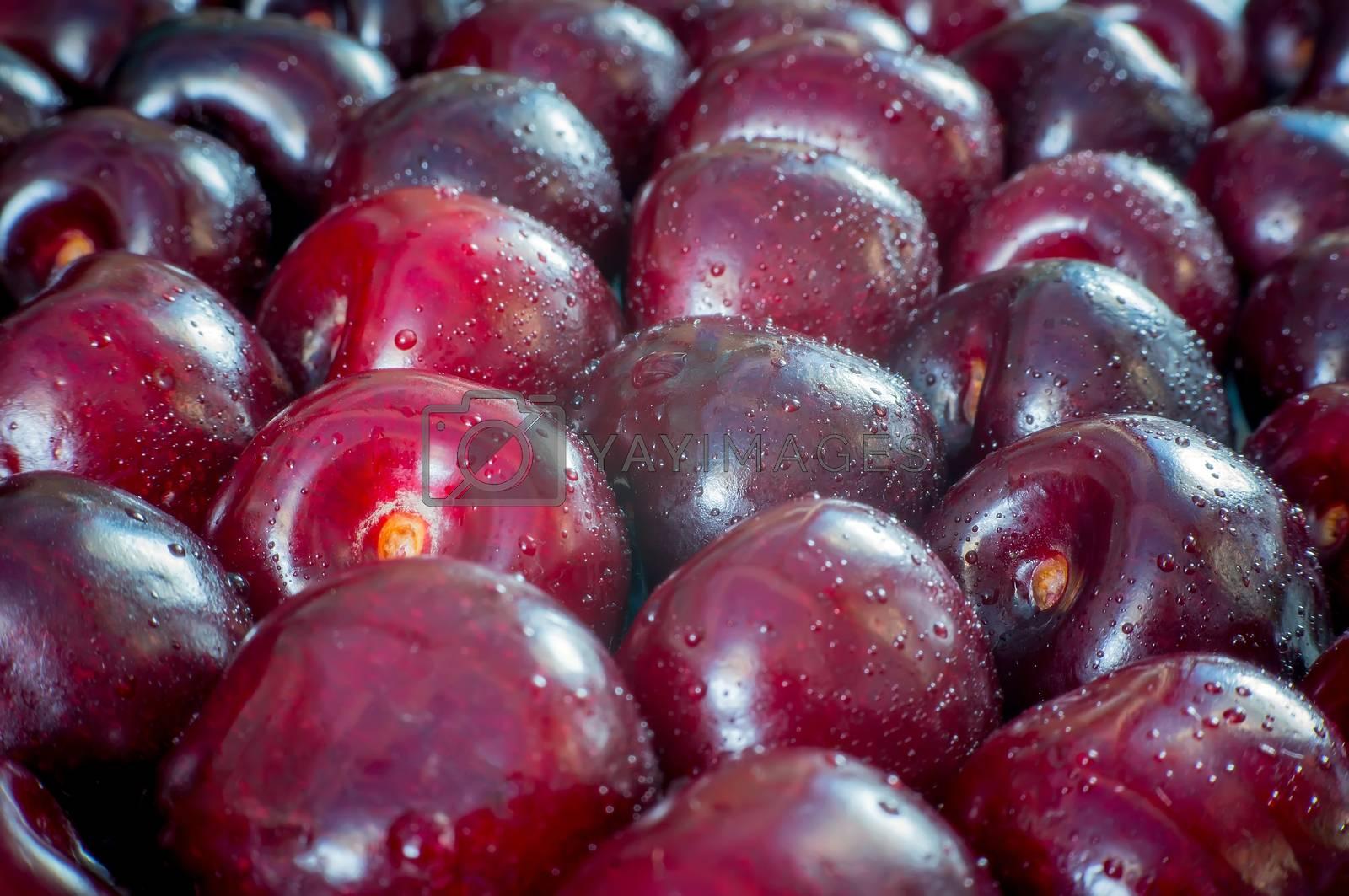Burgundy cherry closeup dark background. sour cherries, close-up view