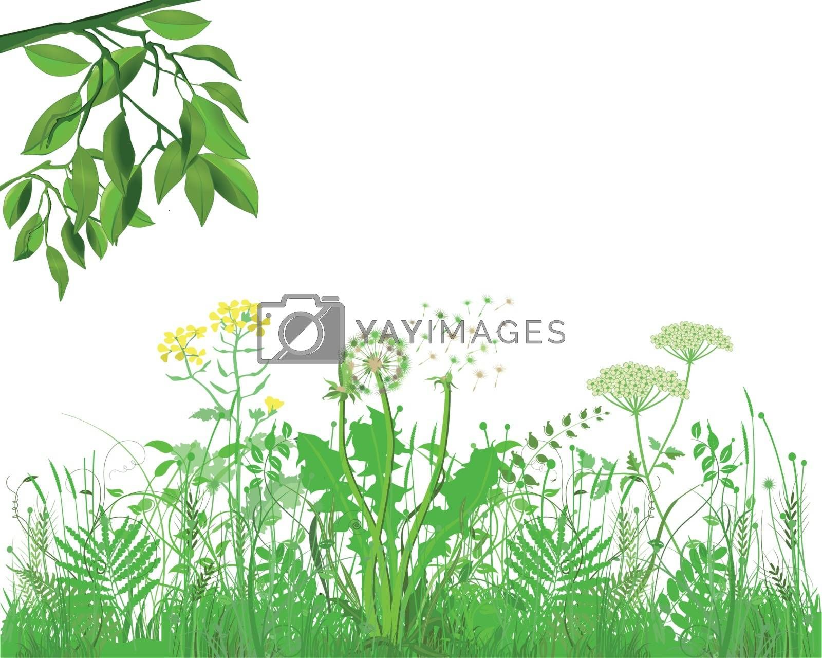 Grasses with herbs and flowers, Illustration