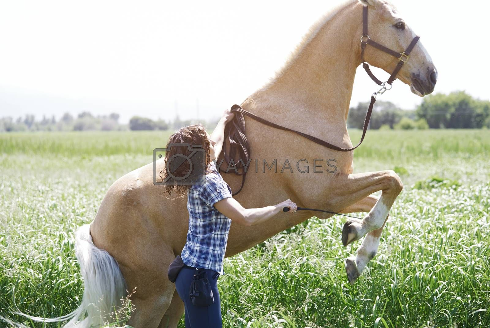 Woman training horse to rear up