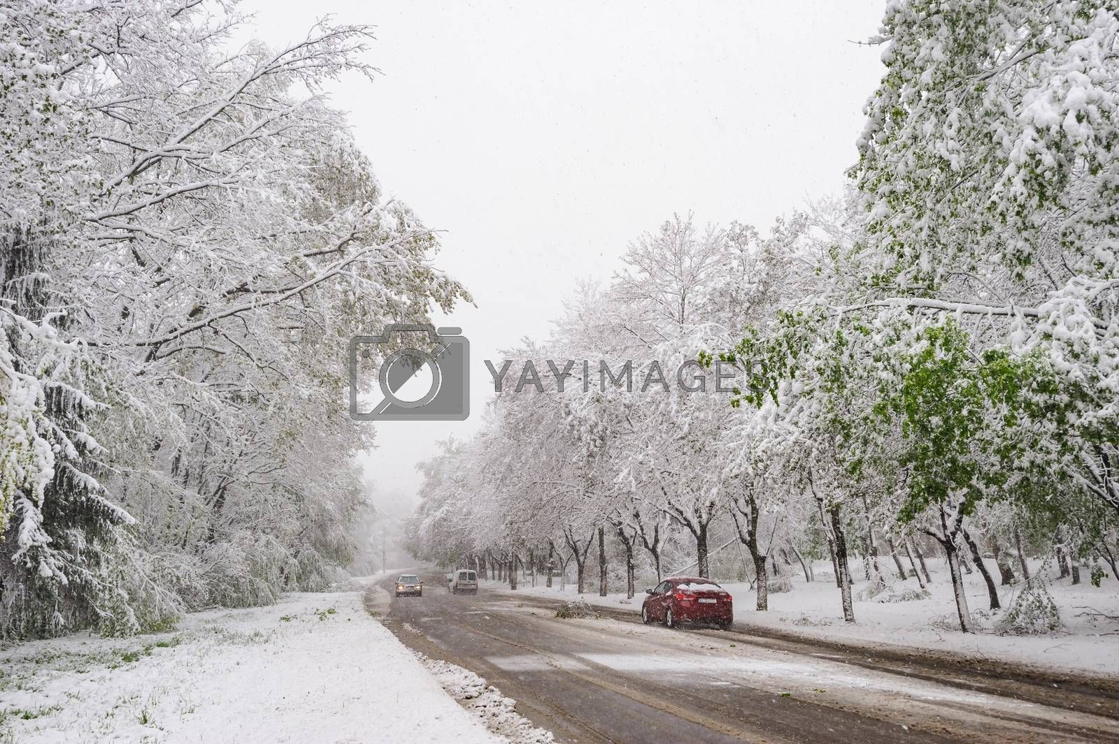 Winter snowy road with cars and green tees