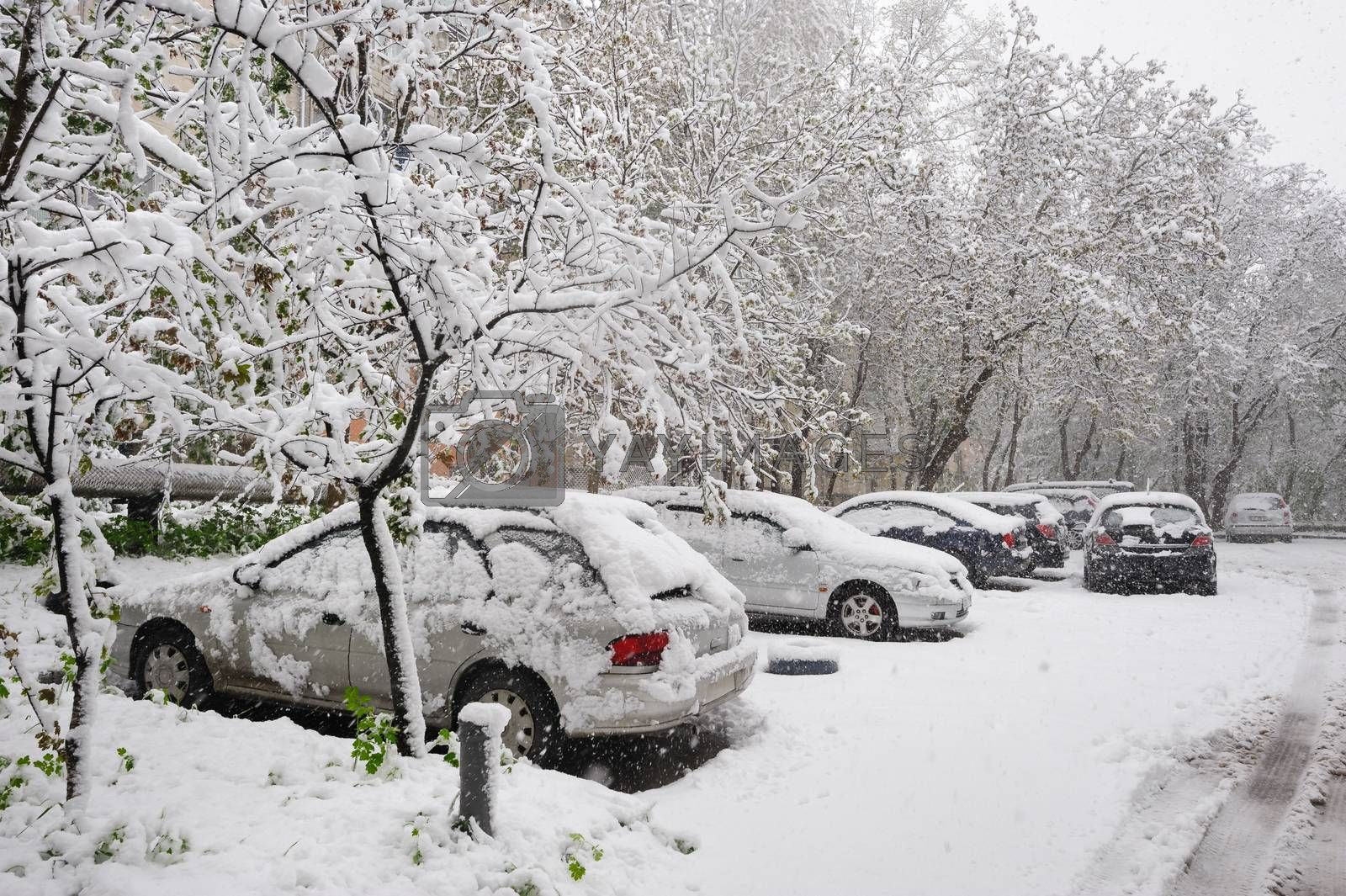snow covered cars at winter parking and trees around