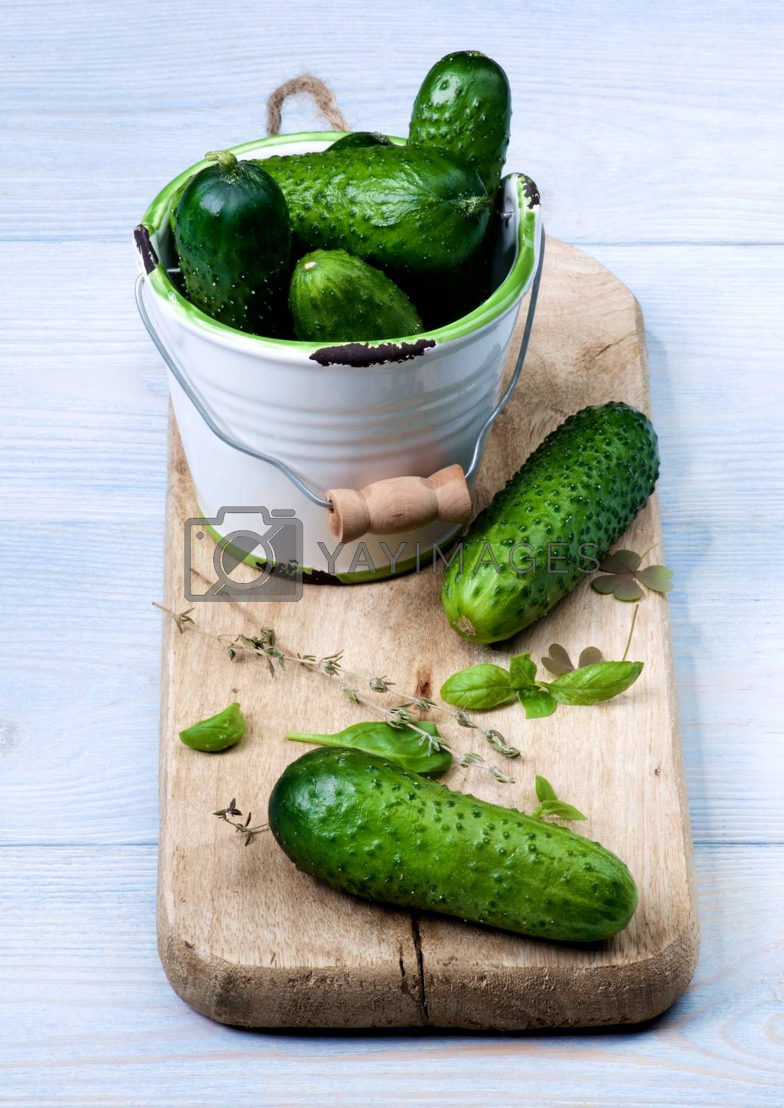 Fresh Raw Cucumbers by zhekos