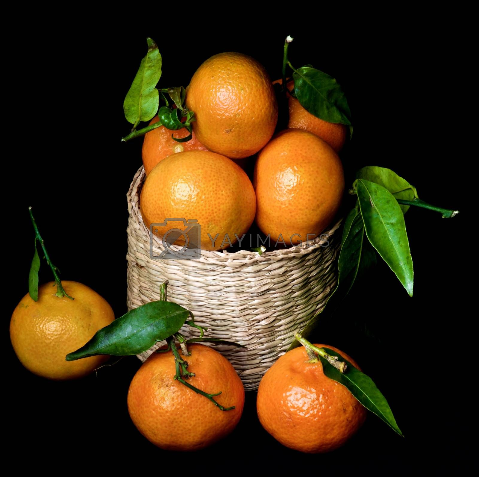 Ripe Tangerines with Leafs by zhekos