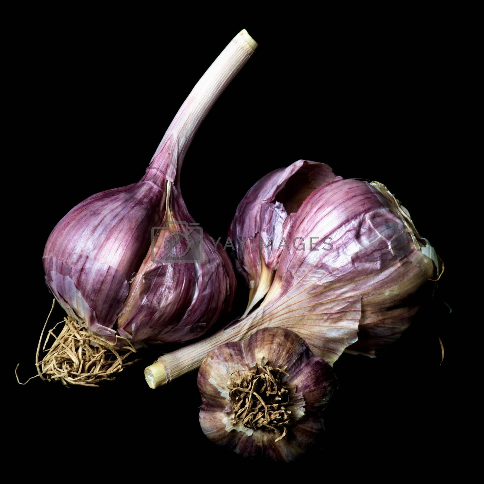 Ripe Dried Garlic Full Body isolated on Black background