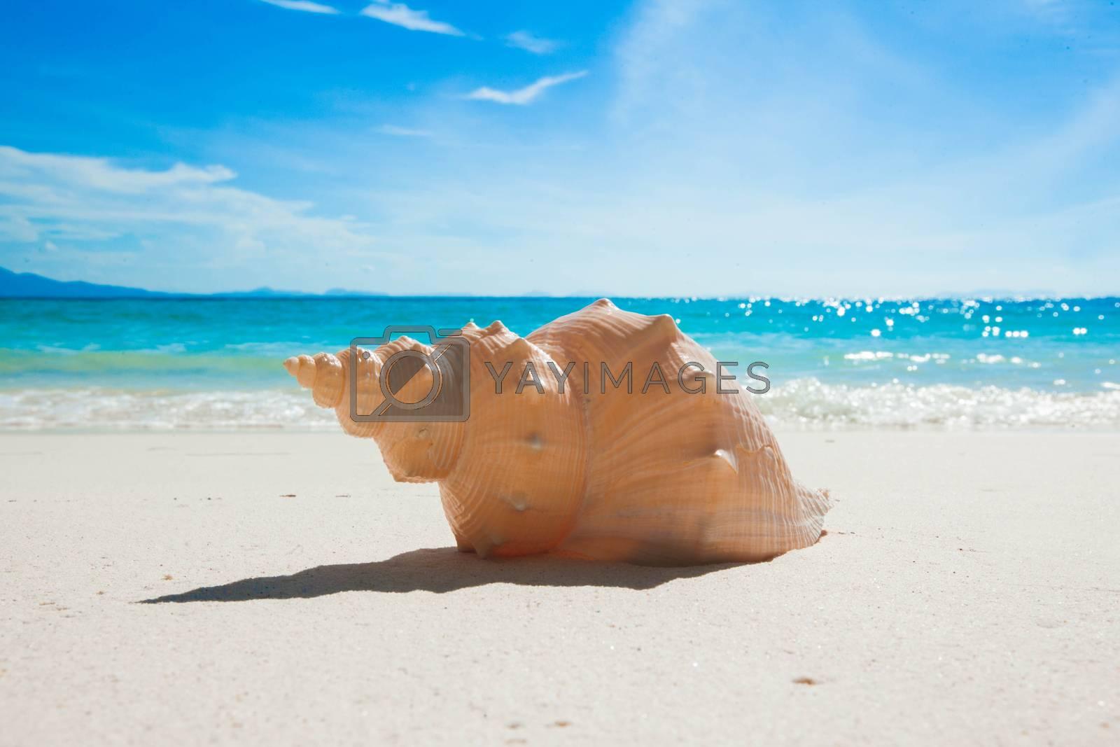 Seashell on sand of tropical sea beach