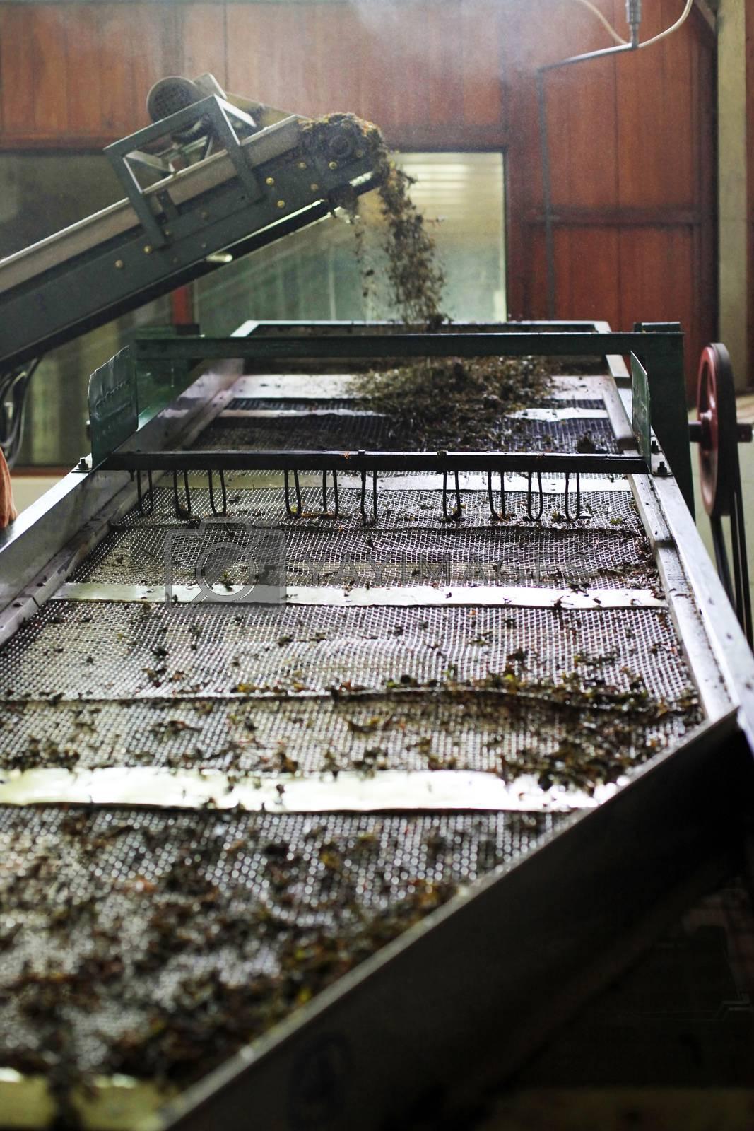 Ceylon Tea Factory on Sri Lanka